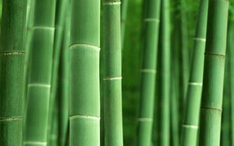 合作遊戲 - 舉「竹」輕重 - 草草了事