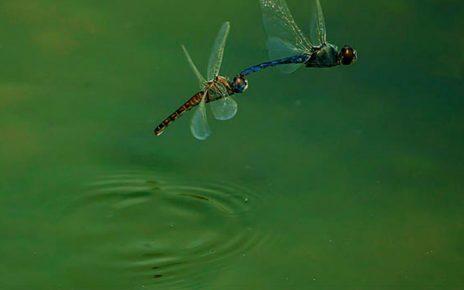 合作遊戲 - 蜻蜓點水 - 草草了事